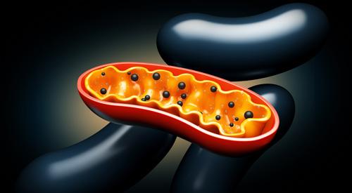 mitochondrien_ratgeber_tcmlaser_schmal1.jpg