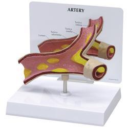Arterie Modell