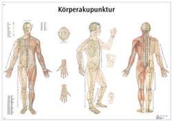 Lehrtafel - Körperakupunktur Laminiert