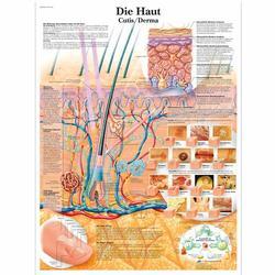 Lehrtafel - Die Haut