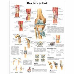 Lehrtafel - Das Kniegelenk