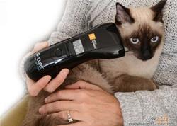 Softlaser B-Cure® VET PRO,  Laserdusche für Tiere / Bild 5