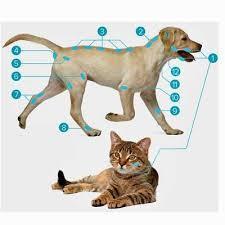 Softlaser B-Cure® VET PRO,  Laserdusche für Tiere / Bild 2