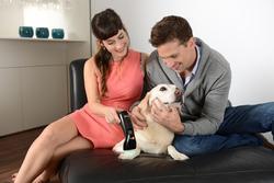 Softlaser B-Cure® VET PRO,  Laserdusche für Tiere / Bild 6